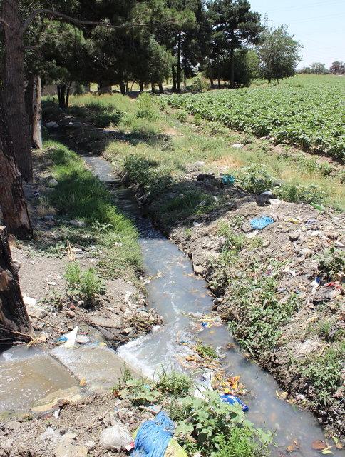 انهدام اراضی کشاورزی که با فاضلاب آبیاری می شوند
